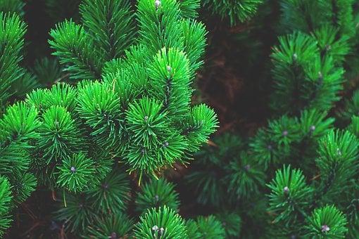 Toprak Elementi Burçlarının Özellikleri